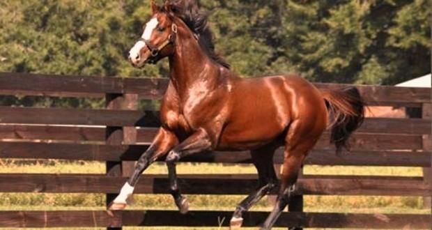 Шыгырдане пройдут всероссийские конно-спортивные соревнования