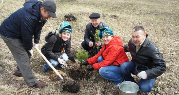 В Омске представители татарского национально-культурного центра «Иртыш» посадиди пихты